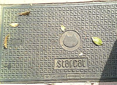 starcat071023.jpg