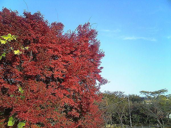 三好池の紅葉